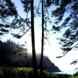 Two Trees on Edge of Lake and Forest at Sunrise  Smuggler Cove  Oregon  USA