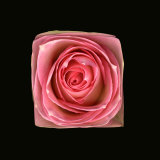 Cubic Pink Rose