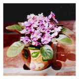 African Violet in Bright Light