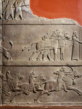 King Assurbanipal Hunting  Relief  c 645 BC Assyrian  from Nineveh