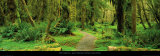 Road through Temperate Rain Forest  Olympic Peninsula