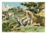 Ancient Greek Sodomising a Goat  plate XVII from 'De Figuris Veneris' by FK Forberg  pub 1900
