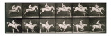 Man and horse jumping a fence  plate 643 from &#39;Animal Locomotion&#39;  1887