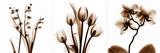 Sepia Floral II