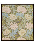 Chrysanthemum&#39; Wallpaper  1876