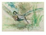 Dragonfly  c1884