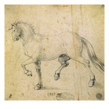 Horse  1503