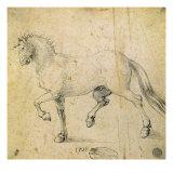 Horse  1503