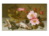 Still Life Depicting Flowers  Shells and a Dragonfly