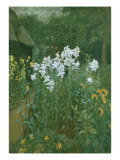 Madonna Lilies in a Garden