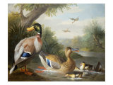 Ducks in a River Landscape
