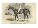 Sir Tatton Sykes'  Winner of St Leger  from 'The Illustrated London News'  26th September 1846