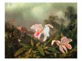 Jungle Orchids and Hummingbirds  1872