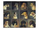 Twelve Favourite Dogs  1883