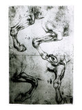 Studies of Horses legs
