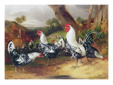 Cockerels in a Landscape