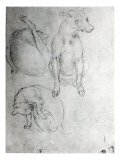 Study of a Dog and a Cat  c1480