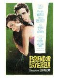 Splendor in the Grass  Spanish Movie Poster  1961