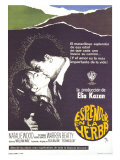 Splendor in the Grass  Spanish Movie Poster  1961