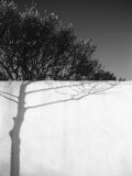 Tree Trunk Shadow on a Wall