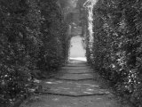 Path with Shrubs at the Boboli Gardens in Florence  Italy