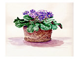 Purple African Violet in Basket