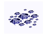 Blue School Dapple Fish Print