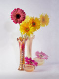 Gerbera Daisies in Antique Vase