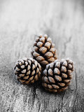 Frosted Pine Cones on Rustic Wooden Table