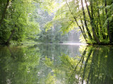 Spreewald Canal Reflection  an Area of Old Canals in Woods