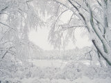 Image of Snow Covered Trees
