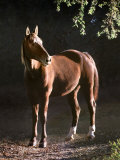 Brown Horse Standing on Trail by Tree