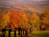 Autumn Scenery with Horses Grazing and Corral  Germany