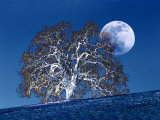 Oak Tree and Moonrise