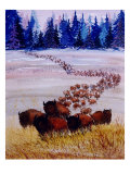 Large Herd of Bison Cross a Vast Plain