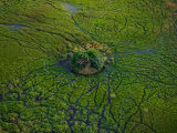 Aerial View of Animal Trails Leading to a Small Island in the Delta