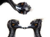 Kissing Emus