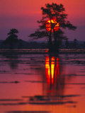Cypress Swamp at Sunrise, Texas, USA Papier Photo par Diane Miller