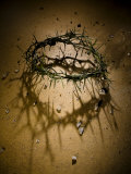 Crown of Thorns with Large Shadow and Pieces of Rock Papier Photo par Joshua Hultquist