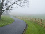 Misty Driveway