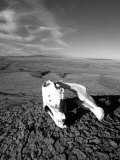 Close View of a Horse Skull in the Desert