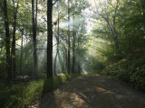 Sunbeams Cut Through the Morning Mist on a Country Road