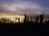 Setting Sun Peeks Through Wooden Posts