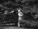 Person in an Easter Bunny Costume Hides in the Trees