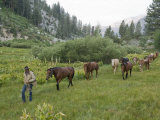 Man Leads Horses Through King Canyon National Park