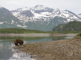 Alaskan Brown Bear Foraging by the Water in a Snowy Mountain Landscape