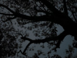 Soft Focus View of Tree Branches Silhouetted Against a Dark Sky