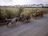 Ox Carts on the Road Between Tehuantepec and Juchitan  Oaxaca  Mexico