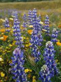 Spring Wildflowers in a Field