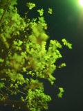 Street Lamp Illuminates the Leaves of a Tree in a Tokyo Street